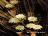 cactus_fl.jpg