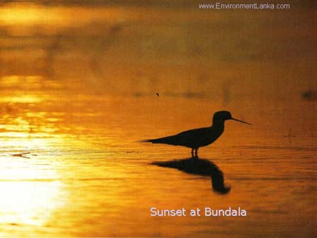 Sunset at Bundala