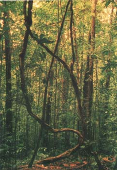 sinharaja rainforest